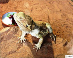 Fortbildung Reptilien Tierarzt; Schlange, Bartagamen, Leopardgeckos & Co.
