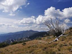 Im Hintergrund der Mount Feathertop