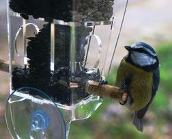 Производство и продажа кормушек для птиц, кормушек для белок, скворечников.