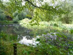 Bild: Teich