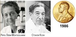 факторыроста, стволовыеклетки, здоровье, уходзателом, красота, долголетие, НобелевскяПремияПоФаткорамРоста, НобелевскаяПремияПоФизиологии,