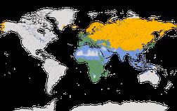 Karte zur Verbreitung der Gattung der Stelzen