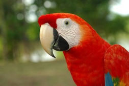 Peru Luxus Reisen Amazonas Kreuzfahrt Paititi Tours