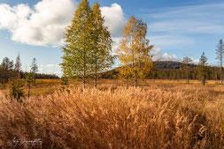 Herbstliche Grüsse vom Niesakero