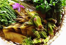 山菜料理てんぷらたらの芽こんてつこしあぶらはりぎりわさび菜こごみうるいたけのこ筍わらび蕨