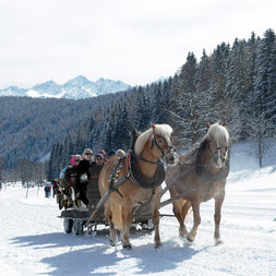 Pferdeschlittenfahrten in der pferdereichsten Gemeinde Ramsau am Dachstein