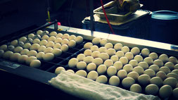 卵の選別風景