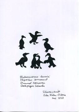 (c) Scherenschnitt: Erika Bulow Osborne  Flugunfähiger Galapagos Kormoran