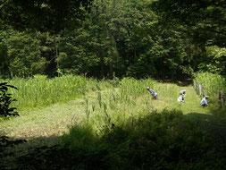 谷戸横断道草刈 左は湿地再生予定地      クリックで拡大