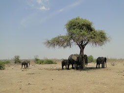 Elephants resting in the shade