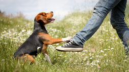 hund sitzt und streckt die Pfote gegen einen Fuß vom Menschen