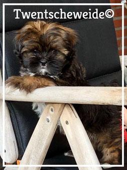 gezonde Boomer pups Twente
