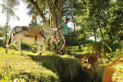 promenade avec les ânes au bord de la rivière à Champseau / M Turin©CRT Limousin
