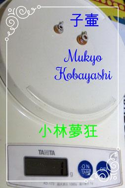 子壷 2つで1g 小林夢狂 MukyoKobayashi