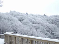 ロープウェイ山上駅付近の樹氷