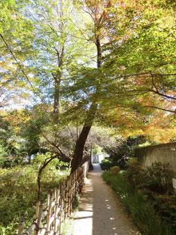 ●お鷹の道。気持ちのよい散歩みちです