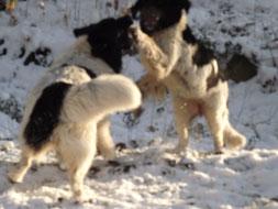Spielspaß im Schnee