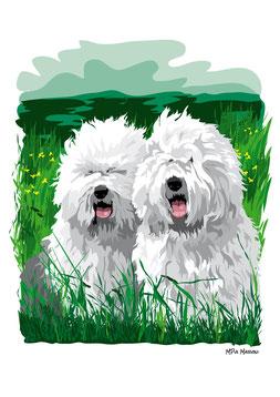 disegno-drawing-bobtail-cane-dog-digital-art-due-cane-seduti-erba-alta-vicini