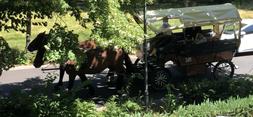 Kutschfahrten - Kutscher von Orb Reiner Berg