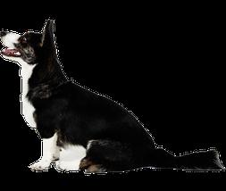 Kolloidales Silber für Hunde