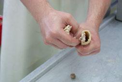Das Fleisch wurde von den Knochen gelöst und die Kalbsknochen können einfach mit der Hand zerbrochen werden