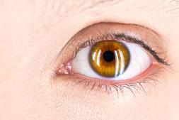Oeil et dermocorticoide