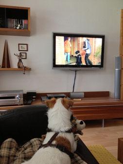 Franky Hadog informiert sich jetzt im Fernsehen über Hundeerziehung