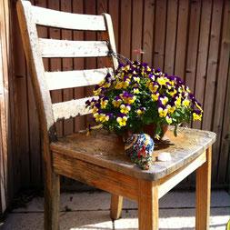 Start in die Gartensaison auf Balkonien - Hornveilchen