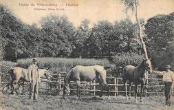 Haras de Paul Dautier à Villacoublay.
