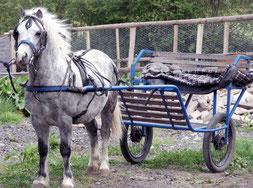 Cheval attelé à un attelage en fer et doté de pneumatiques