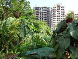 Grüne Oase inmitten der Hochhäuser von Mumbai