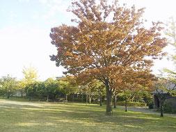 山ノ下海浜公園は紅葉が始まっています。