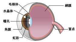 視力障害、眼精疲労の症状