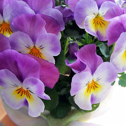 April Blumen