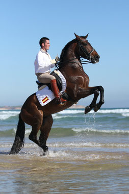 pferde, pferdefotografie, preise, shooting, pferdeshooting, bayern, münchen, originalgröße, hochauflösend
