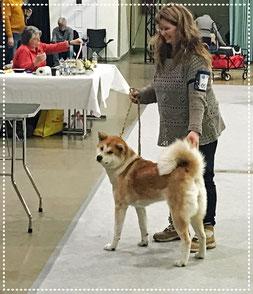 Japan Akita, Umeko of Kishi Ken, Hund, Zucht, Hundezucht, Ausstellung, Hundeausstellung, Int Rasshunde Gemeinschaftsausstellung Erfurt