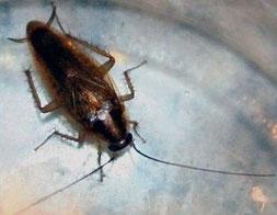 Désinsectisation dans le vaucluse, traitement contre les blattes, cafards, orange, avignon, bollène, 84, gard, drome,