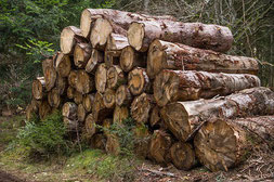 chauffage au bois bûches la groie l'abbé