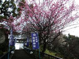 梅が咲き、雪が降り・・・もうすぐ桜
