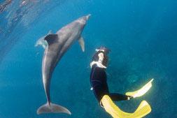 利島で野生のイルカと泳ぐ