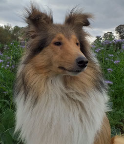 Euphamia Aberdeen of faithful Gentledogs