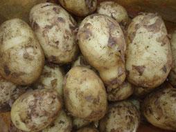 Bild: Kartoffeln Olfen Vinnemann