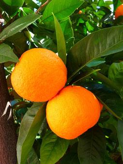 Bild: Orangen, Orange das zweite Chakra