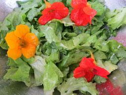 Bild: Salat mit Kapuzinerkresse