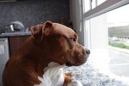 Laisser son chien en pension : stressant ?