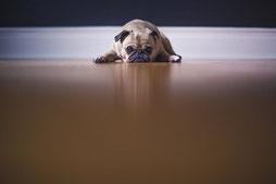 En finir avec l'anthropocentrisme chez le chien