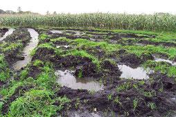 Grünlandumbruch für Mais-Anbau