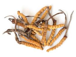 Cordyceps, Vitalpilze, Mykotherapie Praxis Riva Baden