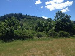 Une forêt de pin avec vue sur une montage par le gite de la gorre en location en ardeche