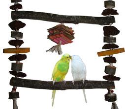 Image result for Offrir des jouets à un perroquet : pourquoi faire ?